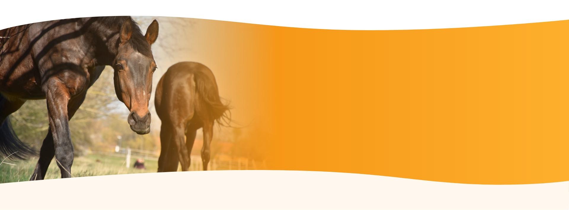 Über mich - Pferde